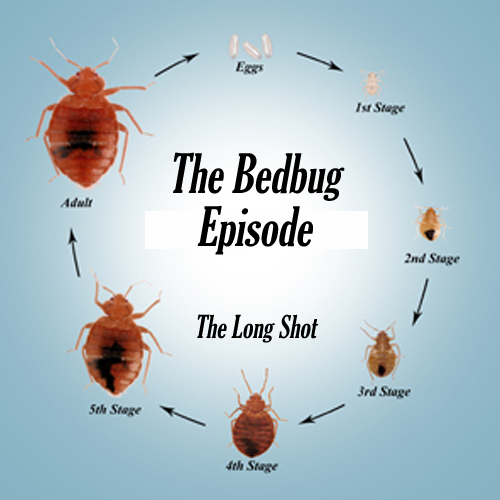 Episode #519: The Bedbug Episode featuring Steve Agee