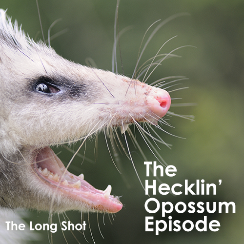 Episode #1006: The Hecklin' Opossum Episode
